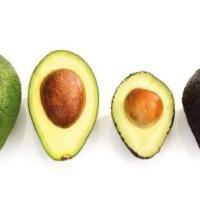 Abacate X Avocado